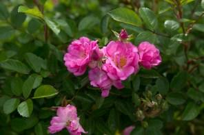 garden_29