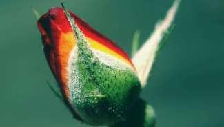 fleur_13a