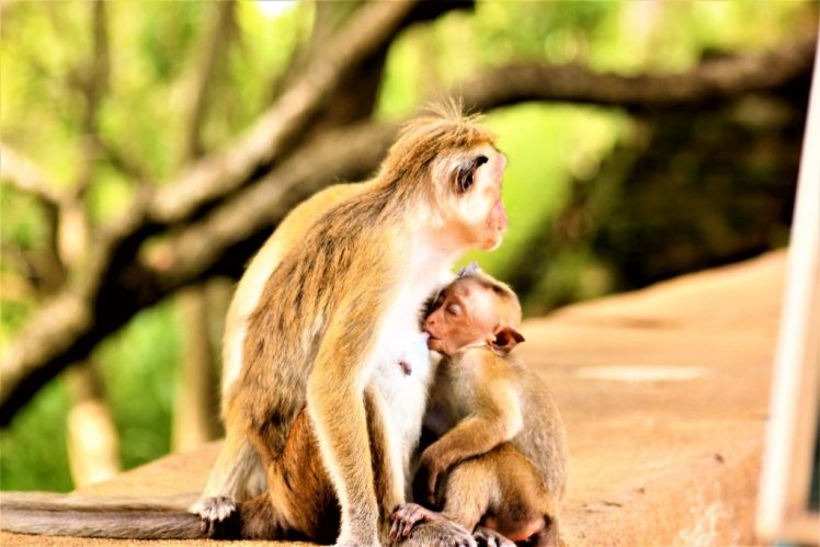 Things to know before travelling to Sri Lanka - the abundance of wildlife that you can see.