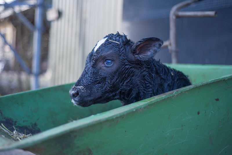 is melk diervriendelijk