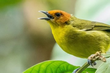 Birds and meditation