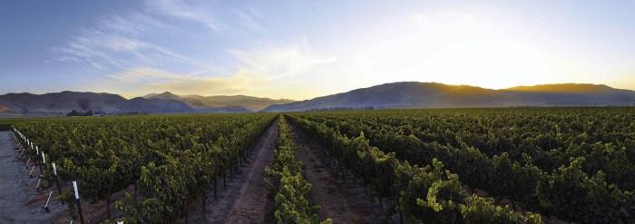 Fog's Reach Vineyard, Arroyo Seco AVA - J. Lohr Vineyards & Wines copy
