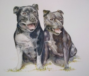 stafforshire-bull-terriers