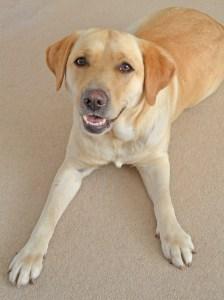 Poppy dog 2