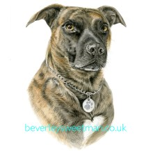Brindle dog watercolour painting