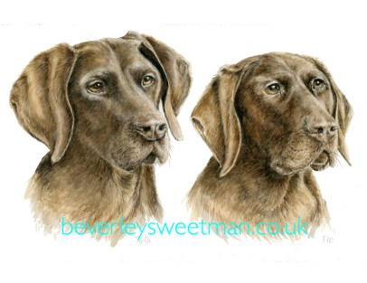 Pointer dog watercolour painting