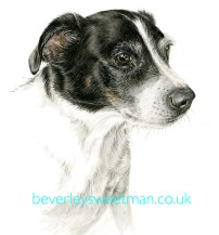 Jack Russell Dog watercolour painting