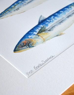 mackerel-fish-painting