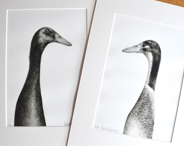2 Indian runner duck watercolour painting - limited edition prints