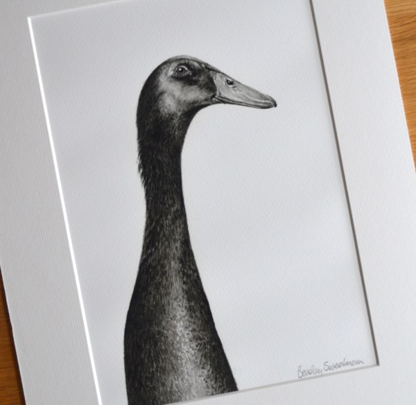 Black Indian runner duck watercolour painting - limited edition print