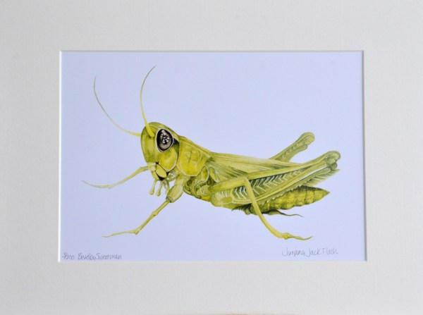 grasshopper watercolour painting - limited edition print