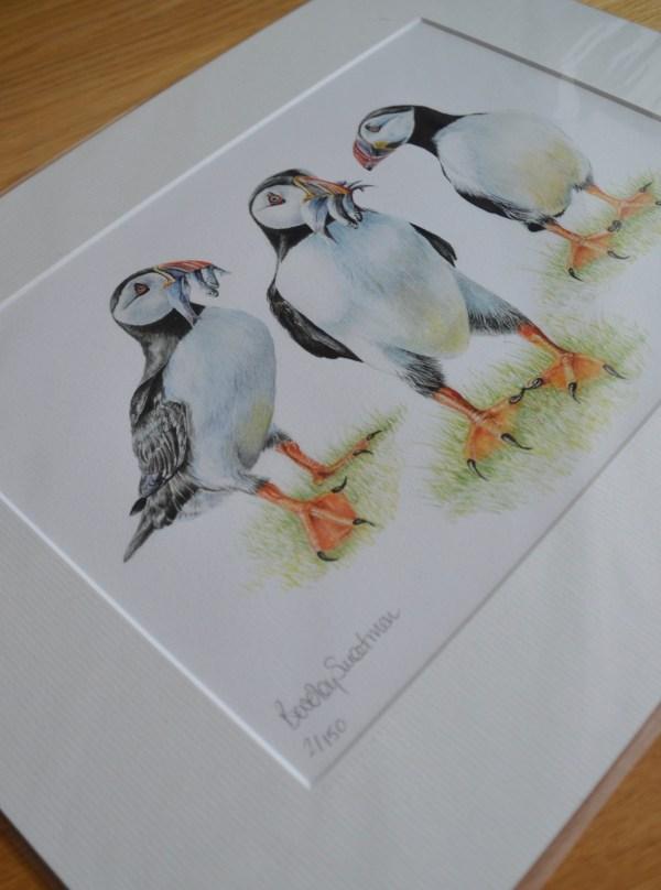 puffins-print