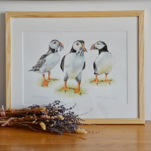 Puffin-watercolour-painting
