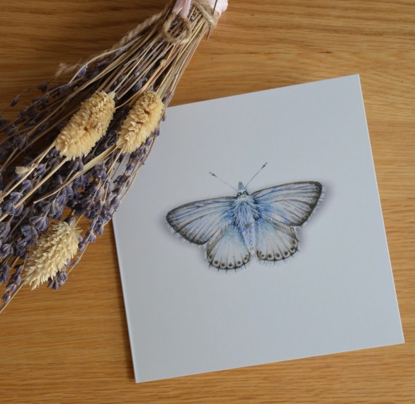 Chalk blue butterfly greetings card