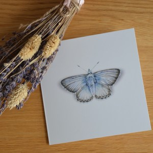 chalk-blue-butterfly-Card