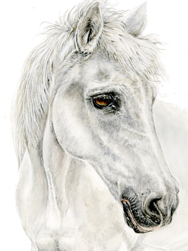 white-horse-for-prices