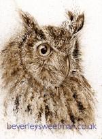 Owl walnut ink painting
