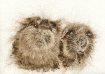 Guinea Pigs walnut ink painting