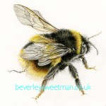Bumble bee wings watercolour painting