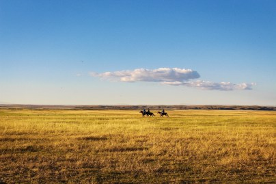 Horses, great Plains
