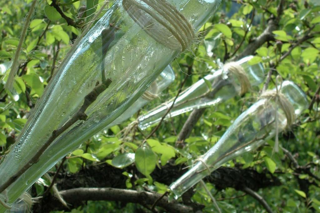 Clear Creek Distillery Pear-In-Bottle Brandy