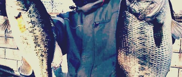 琵琶湖へ (4月11-12日2015年) ~プリスポーン小祭り~ 1
