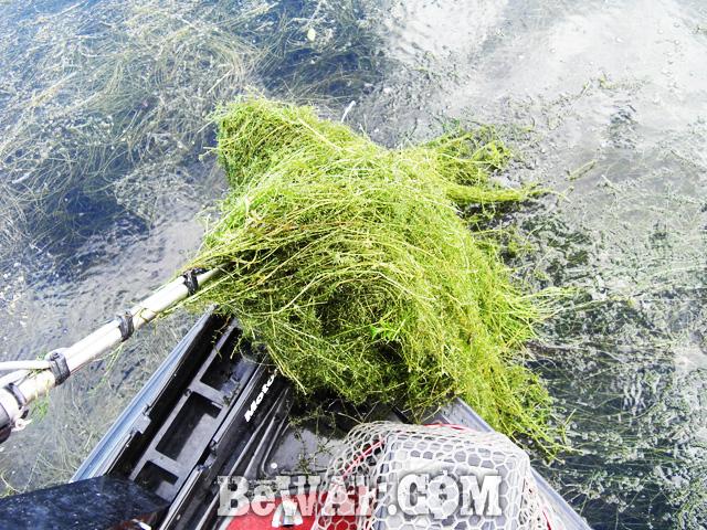 biwako bassfishing guide blog 2015 chouka 23
