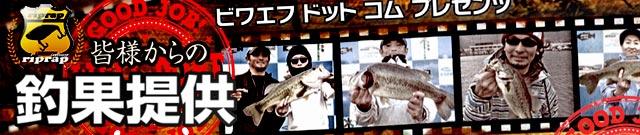 お客様からの釣果:大阪の佐々木様~スイムベイトで50アップ!! 3