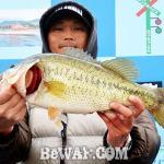 琵琶湖へ (3月25日) プリプリ49センチ