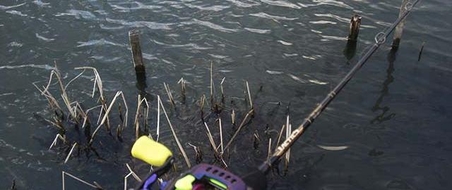 3月11日 琵琶湖 おかっぱり新規開拓 写真
