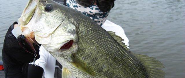 琵琶湖ロングワーム釣行日記 写真