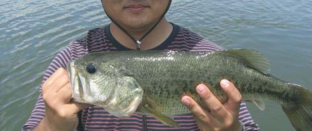 琵琶湖ブルフラットステルススイマー釣果写真