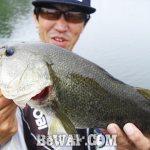 琵琶湖バスフィッシングガイドリポート ~上杉様~ 42cm