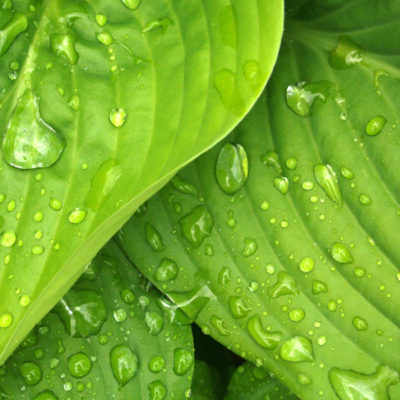 green hosta leaves 38012 400x400 - Bewat MT - Multifuncionales para aguas residuales