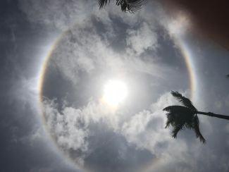 Photograph of semi-eclipse of sun in Jamaica