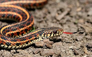 arti-mimpi-bertemu-dan-melihat-ular