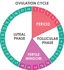 Ovulation facts