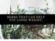 Herbs That Can Help You Loose Weight.