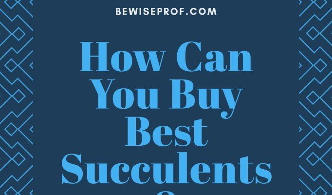 How Can You Buy Best Succulents