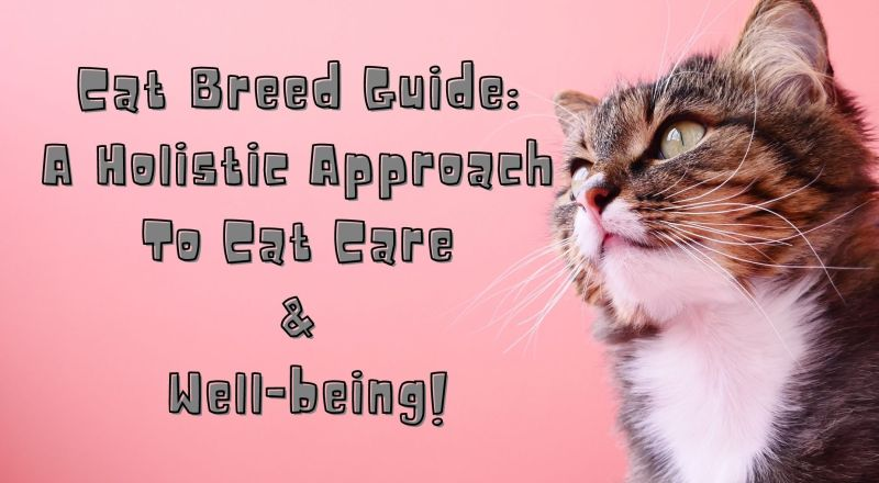 Cat Breed Guide: A Holistic Approach to Cat Care & Well-being!