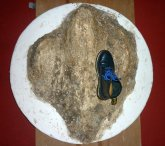 FOS-019 - Dinosaur footprint - East Parade