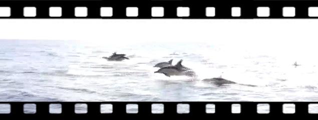 Delphine im Gegenlicht