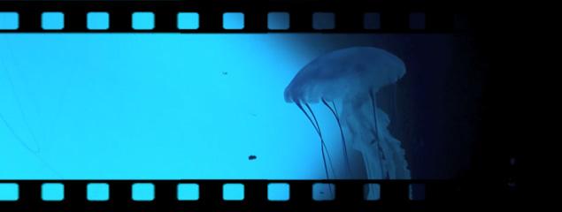 Quallenausstellung im Sea Life München