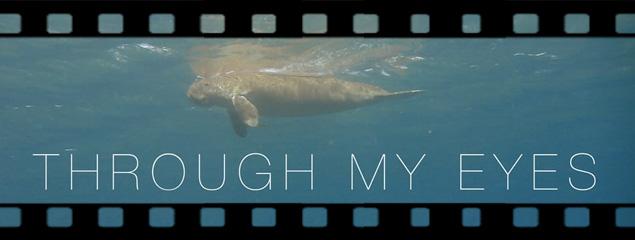 Dugong in Marsa Alam – Massentourismus zu Lasten der Tiere in Ägypten