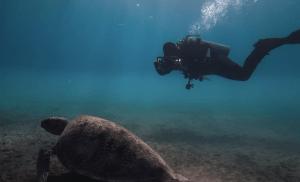 Urlaubsvideo Beispiel Schildkröte