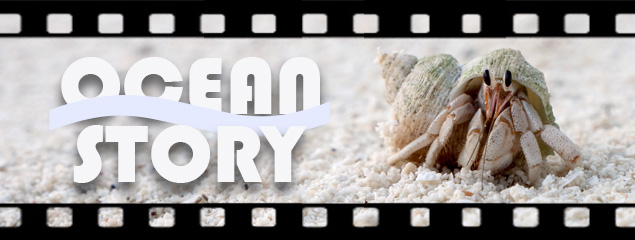Film: Ocean Story – A Coconut's Journey