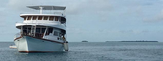 Neuer Bericht: Tauchsafari auf der MY Sheena 2019 (Malediven)
