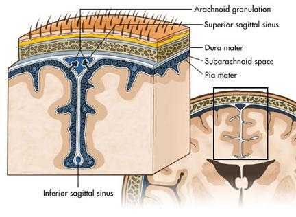 http://www.neurosurgerypa.com/anatomy/neuro_br_subarachnoid.html