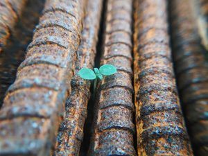 An image of a seedling growing among rusted iron rods.