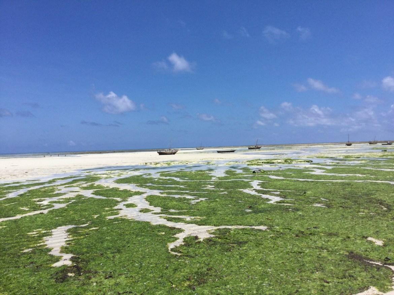 Lost in Zanzibar- Beyond Eden Travel
